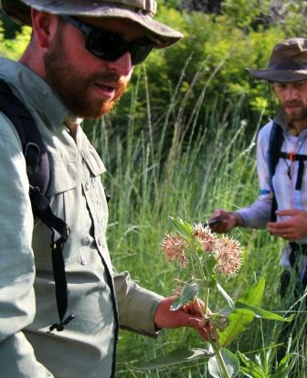 Vance McFarland (student researcher) and Dusty Perkins (Assistant Professor, College of Western Idaho) searching for monarch eggs and larvae at Deer Flat National Wildlife Refuge near Nampa, ID. Photo: Department of Life Sciences, College of Western Idaho